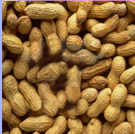 شراء Peanuts