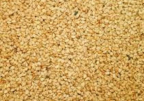 شراء Yellow Sesame Seeds