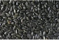 شراء Sunflower Seeds
