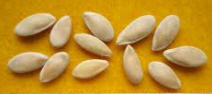 Mellon Seeds