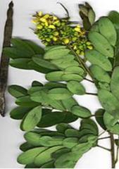 Extract of senna