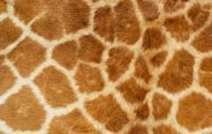 Animal leathers