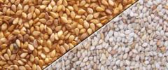 Sudanese Sesame